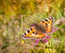 commercial photographer Birmingham - Worcestershire meadow