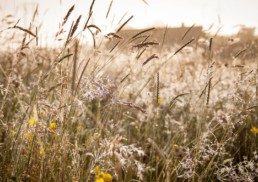 commercial photographer Birmingham - Worcestershire meadow